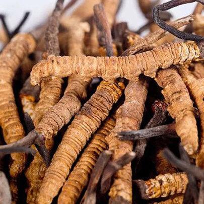 Купить Золотой Кордисепс (Ярсагумба) Свежий 💪 10 грамм